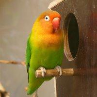 Как и из чего сделать домик для попугаев своими руками фото 971