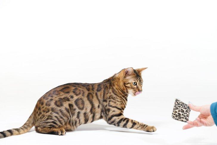 Игровые комплексы для кошек своими руками