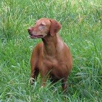 Породы собак и их характер