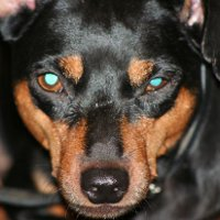 Признаки бешенства у животных