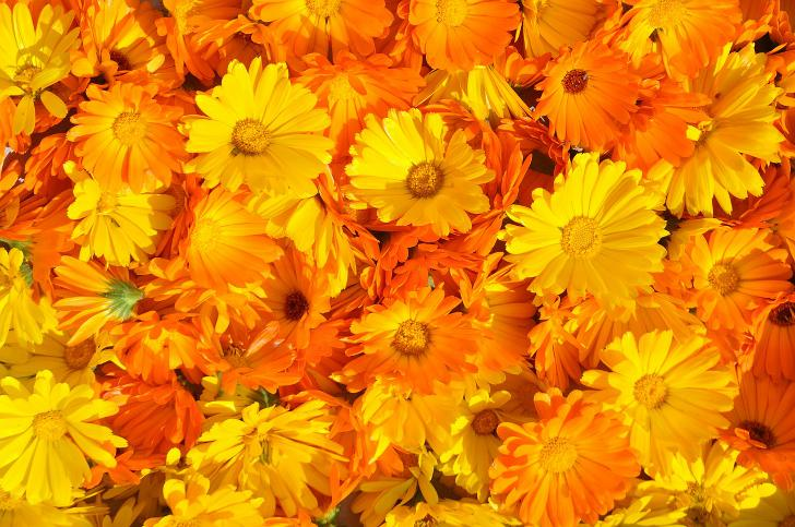http://anydaylife.com/uploads/articles/beauty/face/care/calendula-for-face1.jpg