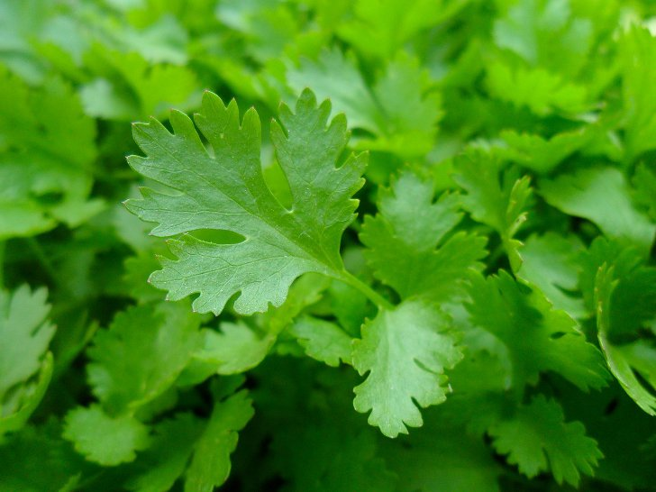 http://anydaylife.com/uploads/articles/beauty/face/care/parsley-for-skin-care-b.jpg