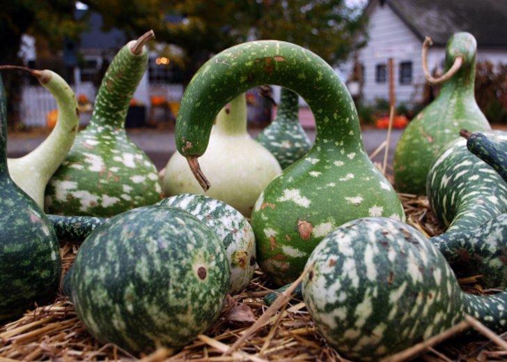 Осенние поделки из овощей и баклажанов
