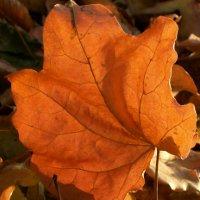 Идеи для фотосессии осенью