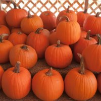 http://anydaylife.com/uploads/articles/housekeeping/cooking/products/how-to-save-pumpkin.jpg