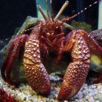 Числе раки креветки крабы омары и