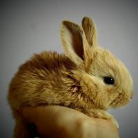чем кормить крольчат