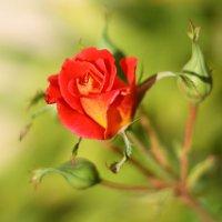К чему снятся лепестки от цветов