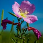 https://anydaylife.com/uploads/events/holidays/commemorates/primrose-day.jpg