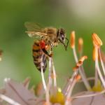 https://anydaylife.com/uploads/events/holidays/nature/national-honey-bee-day.jpg