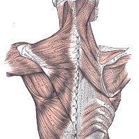 Интересные факты о суставах вычленение сустава