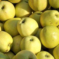 Фестиваль «Антоновские яблоки» в Ельце