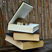 Литературный фестиваль «Просто на Покрову»