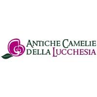 Выставка камелий в Италии