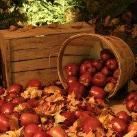 Яблочный фестиваль в Нормандии