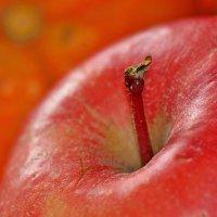 Национальный яблочный фестиваль в Аргентине