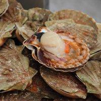 Фестиваль морских гребешков в Нормандии