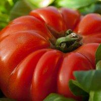 Сызранский помидор