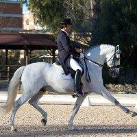 Национальная конная ярмарка в Португалии